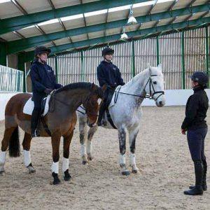 NTU Horse Management